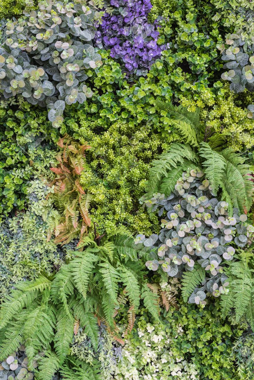 Vertical Garden Wall Background Variety Of Plants On Vertical