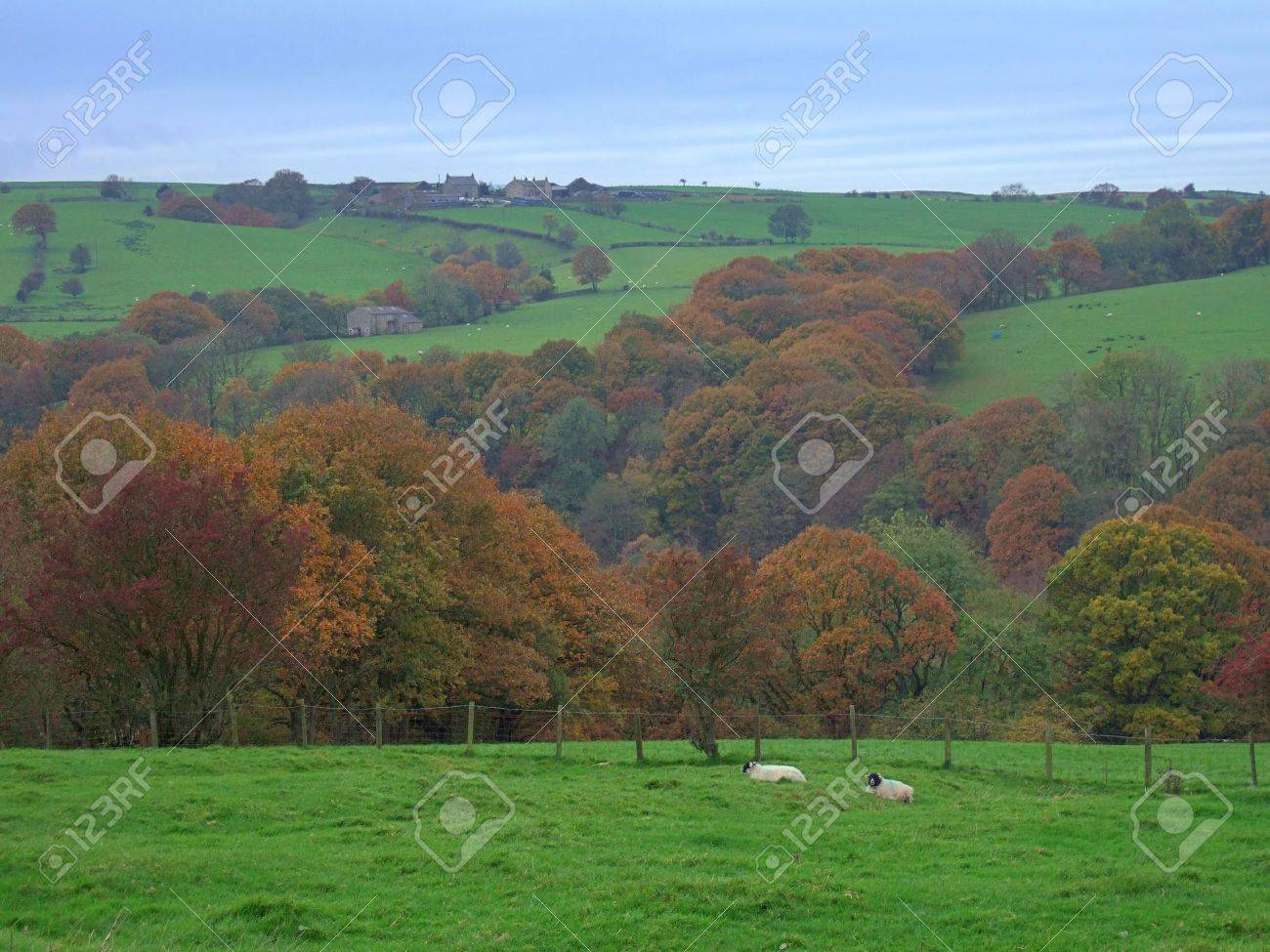 Autumn scene in the forest of Bowland, near Lancaster, Lancashire, England Stock Photo - 684936