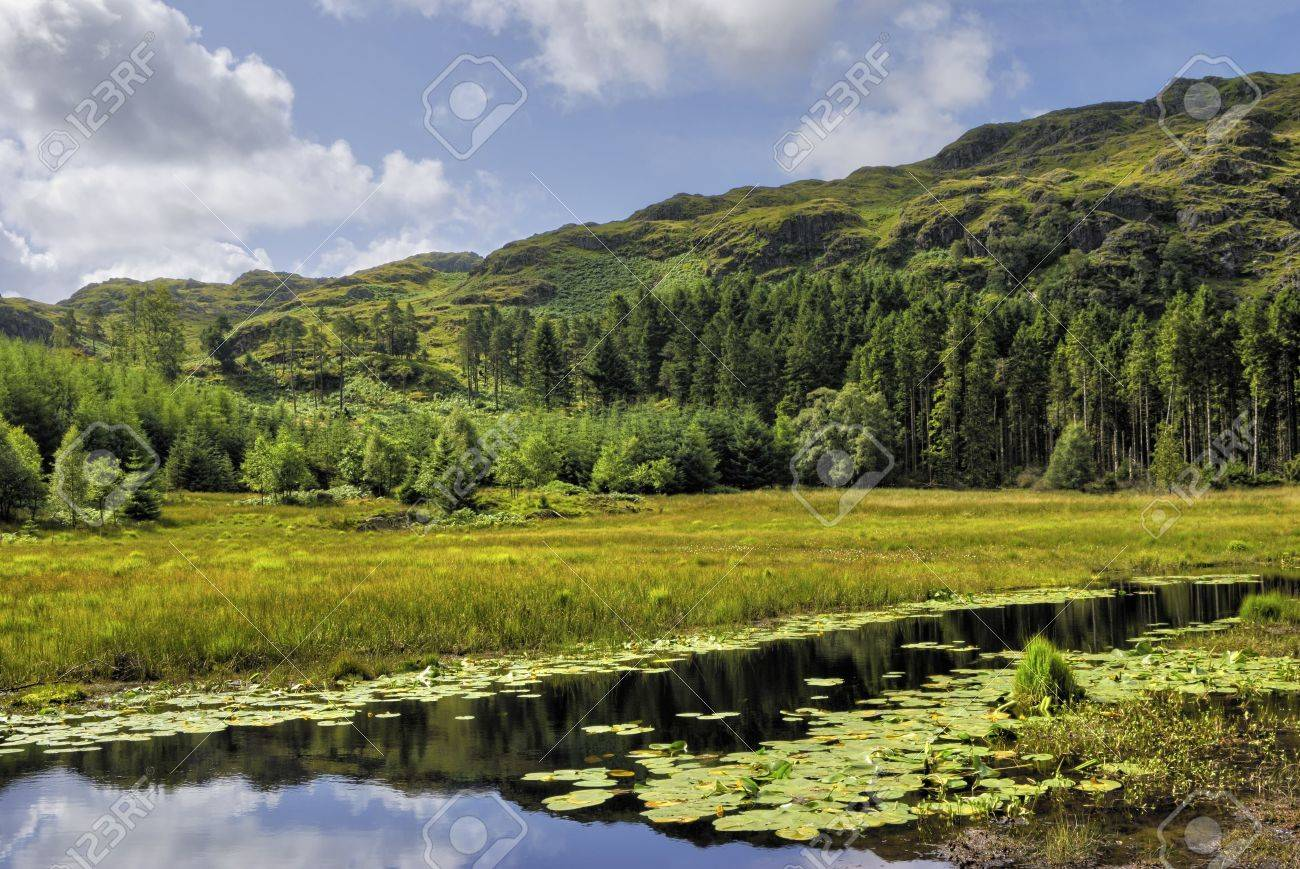 Scenic view of Harrop Tarn with forest in background, Wythburn Fells, Lake District National Park, Cumbria, England. Stock Photo - 5927840