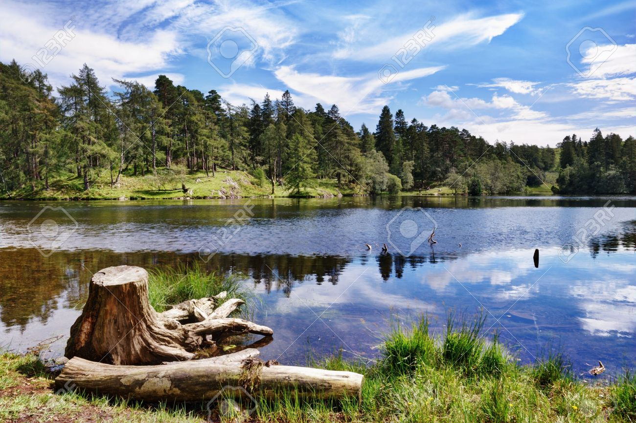 A tree stump on the shore of Tarn Hows, a small lake in the English Lake District Stock Photo - 15375169