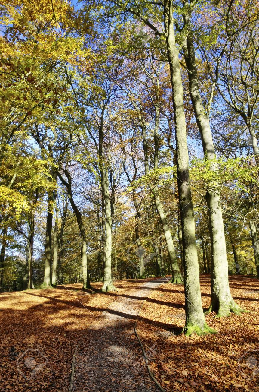 view of autumn trees in Talkin Tarn Country Park, Brampton, with the sun casting shadows across the woodland pathway leafy branches Stock Photo - 17084737