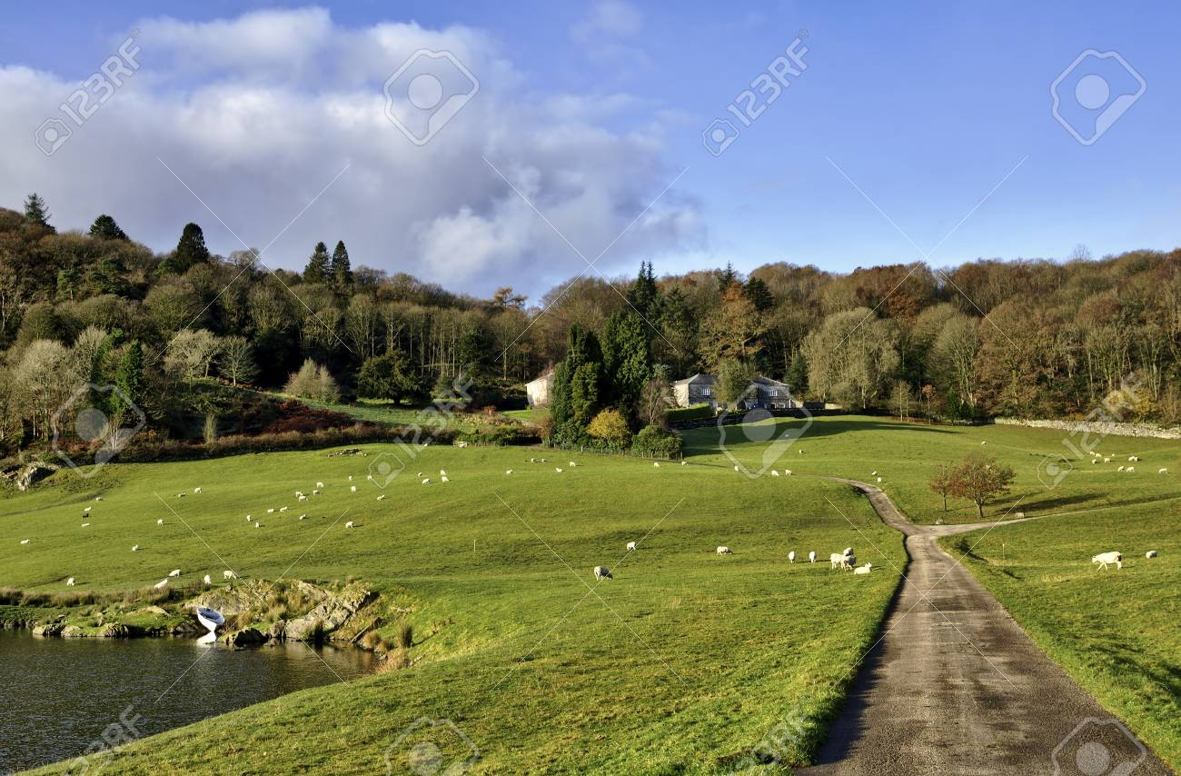 Lane running up to a country house tucked amongst trees, with a lake set in green fields, in the Winster Valley in the English Lake District Stock Photo - 17084735