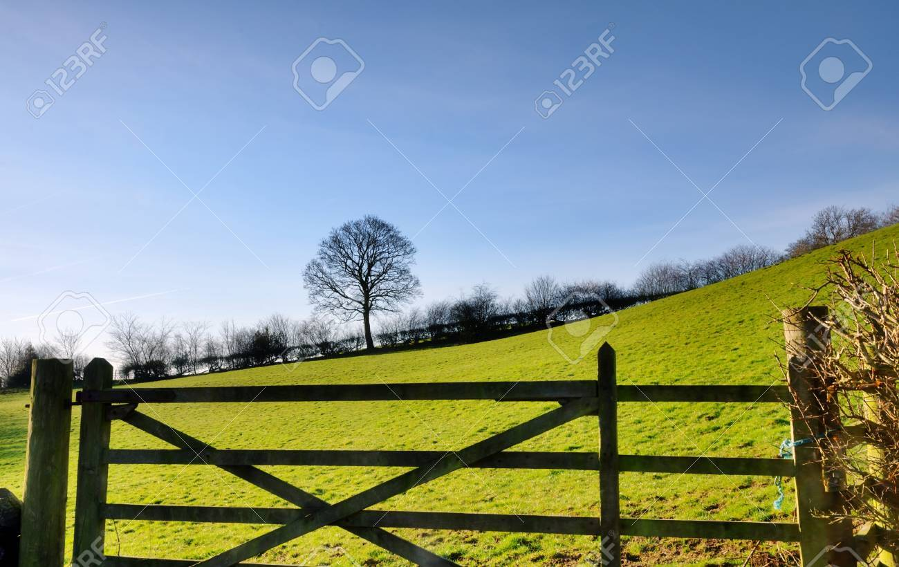 View of a tree and hedgerow bordering a green, sloping field in the English countryside, with a wooden gate in the foreground Stock Photo - 18517402