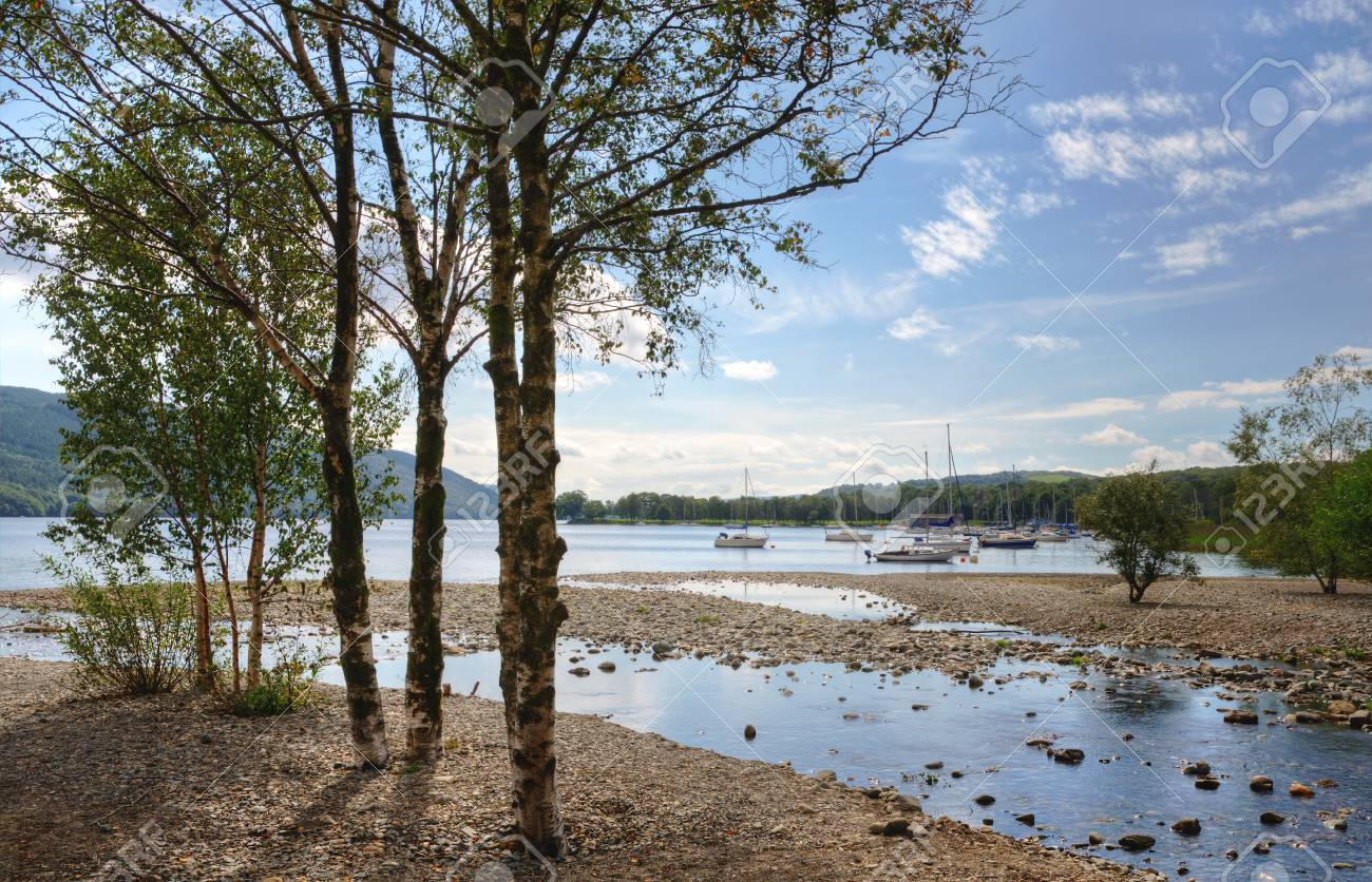Silver Birch trees growing by the shore of Coniston Water in the English Lake District, Cumbria Stock Photo - 23868124