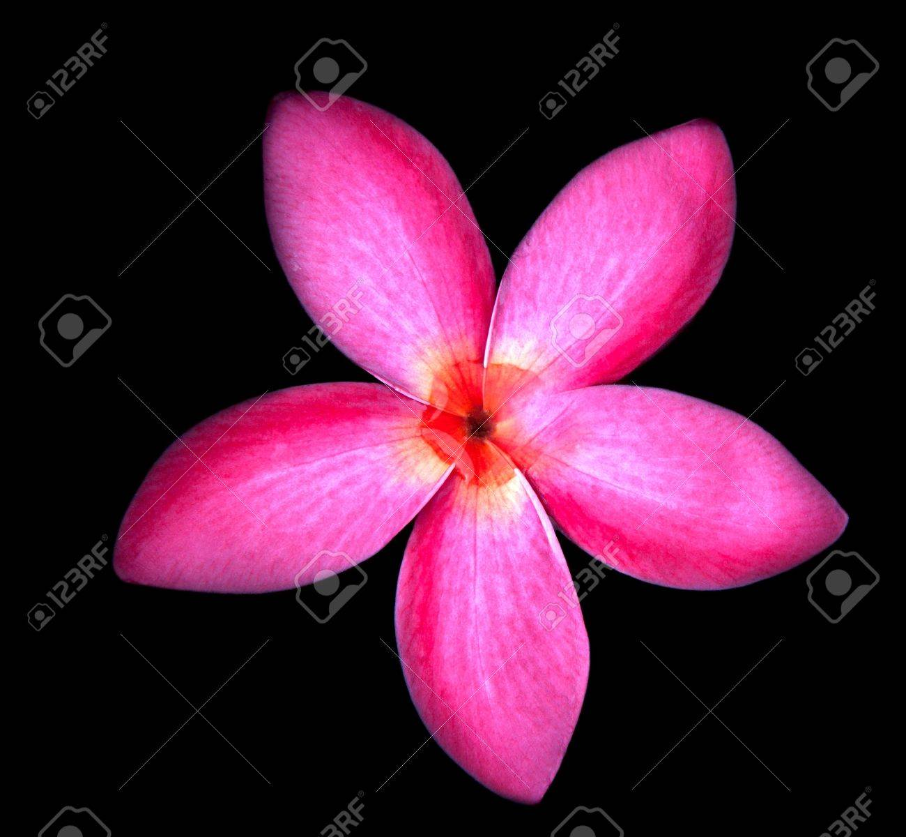red fragipani flowers with fresh water on center Stock Photo - 13903841