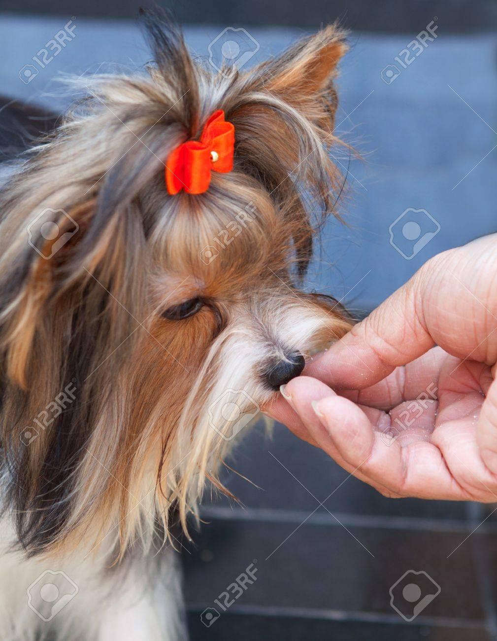 hand feeding food to pet dog Stock Photo - 14605420