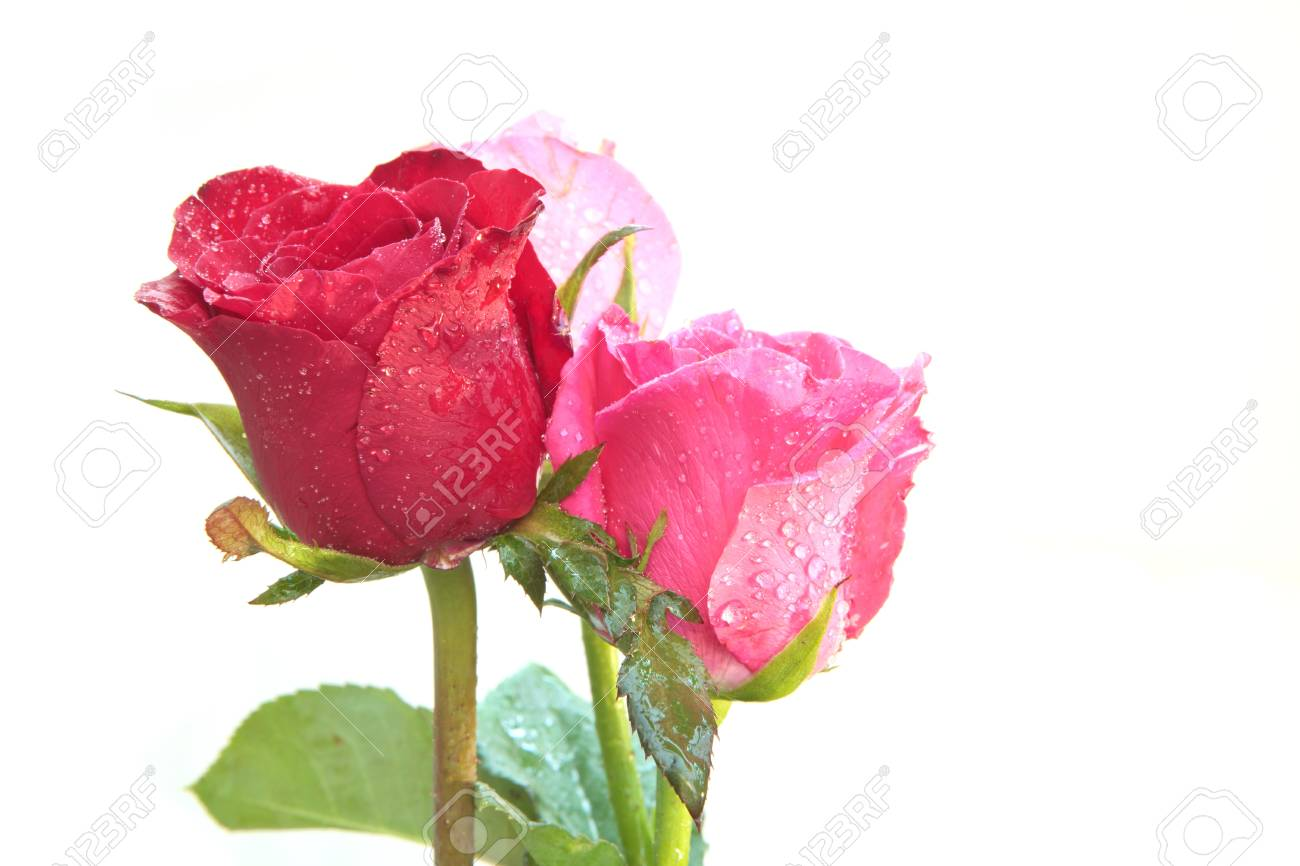 bouquet of red roses flower isolated white Stock Photo - 16251292