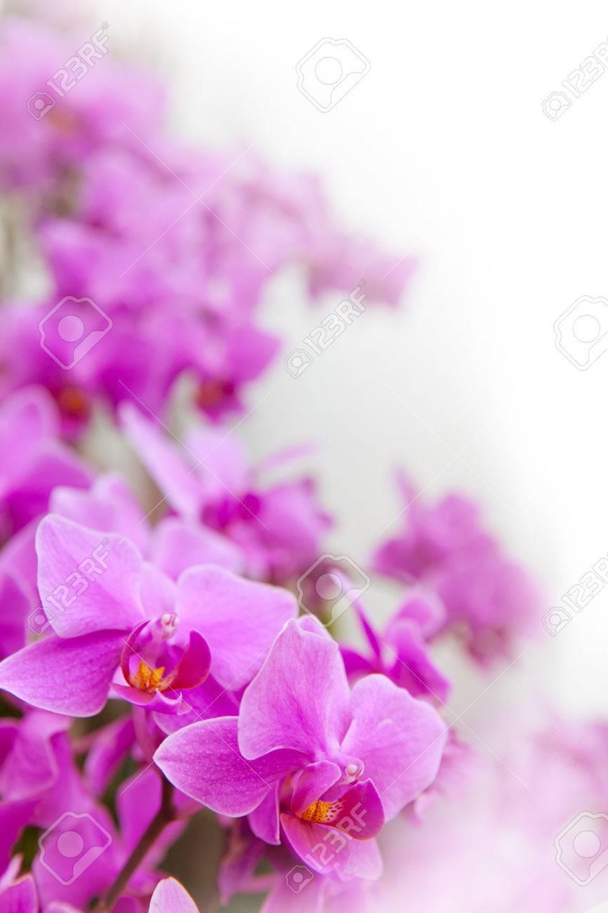 Immagini Stock Bella Di Orchidea Tropicale Fiore In Fiore Mostra