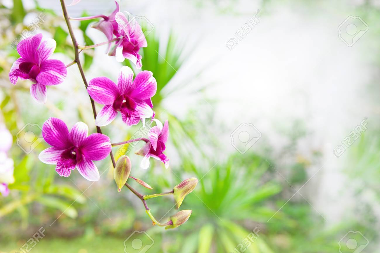Pink Purple Orchid Flower Bouquet In Green Park With Copy Space ...