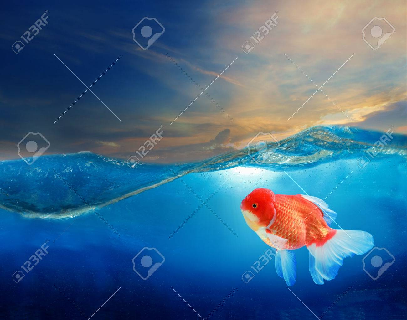 gold fish under blue water with beautiful dramatic sky Stock Photo - 23858828