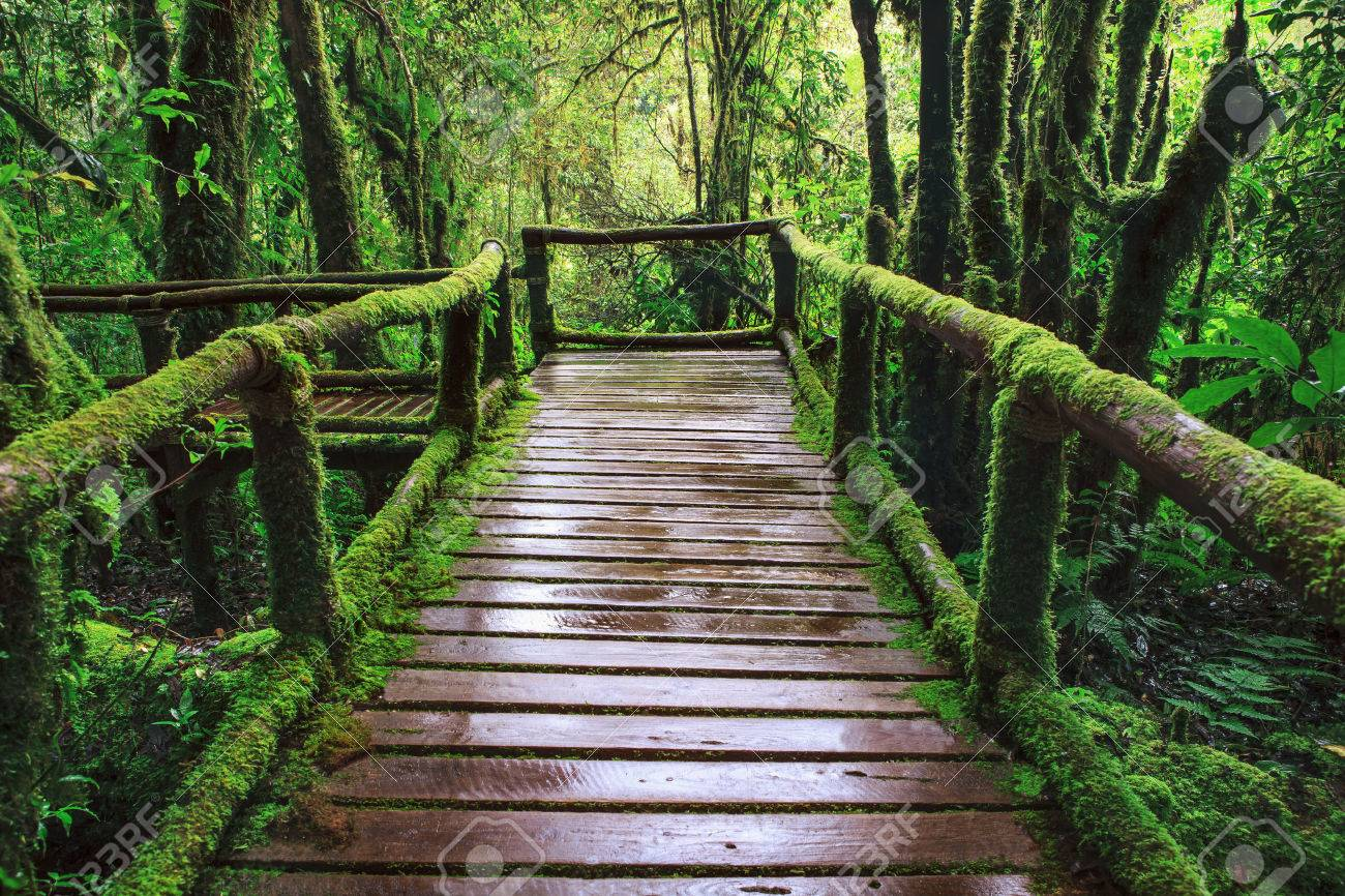 [Image: 25207781-wet-wooden-trail-birdge-walking...-Photo.jpg]