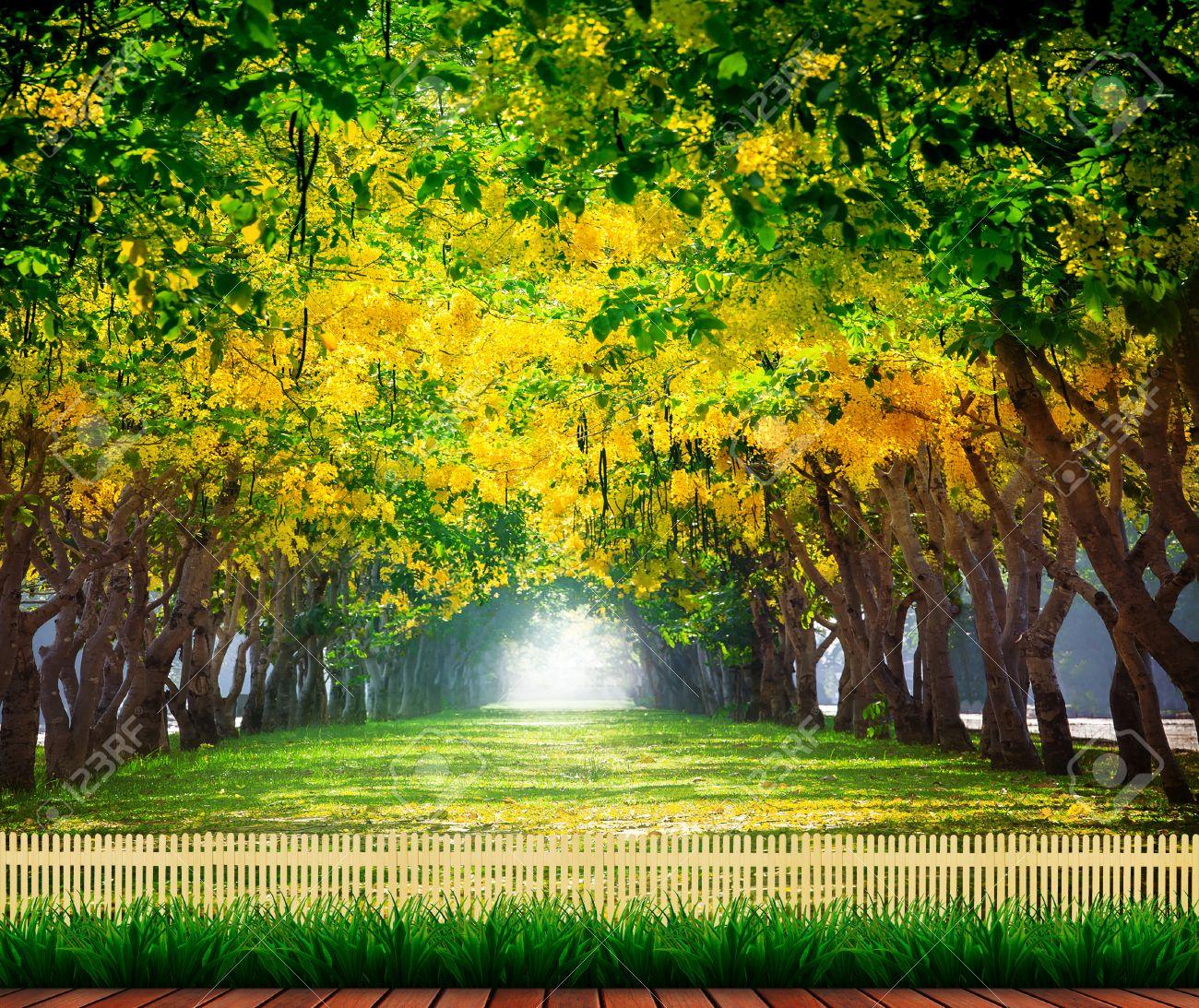 Terraza De Madera Con Fresco Y Verde Hermoso Del Verano Florecen Las Flores De Color Amarillo Túnel En El Parque Lluvia Dorada Cassia Fístula La
