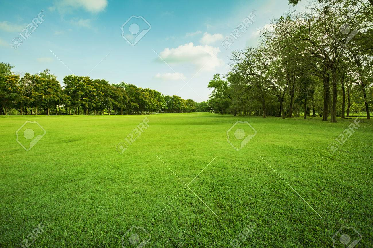 landscape of grass field and green environment public park use as natural background,backdrop - 69103599