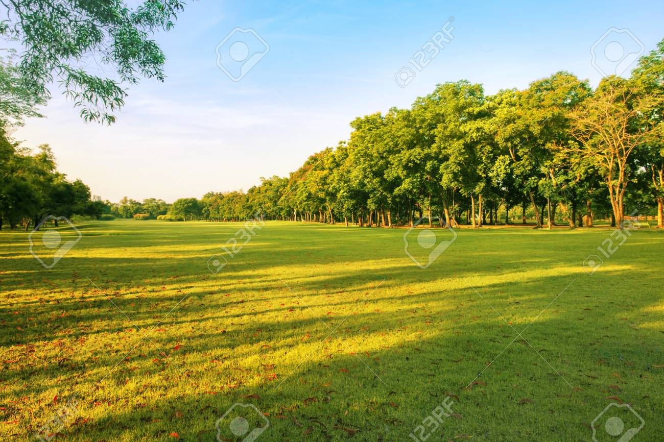 landscape of grass field and green environment public park use as natural background,backdrop - 68047685
