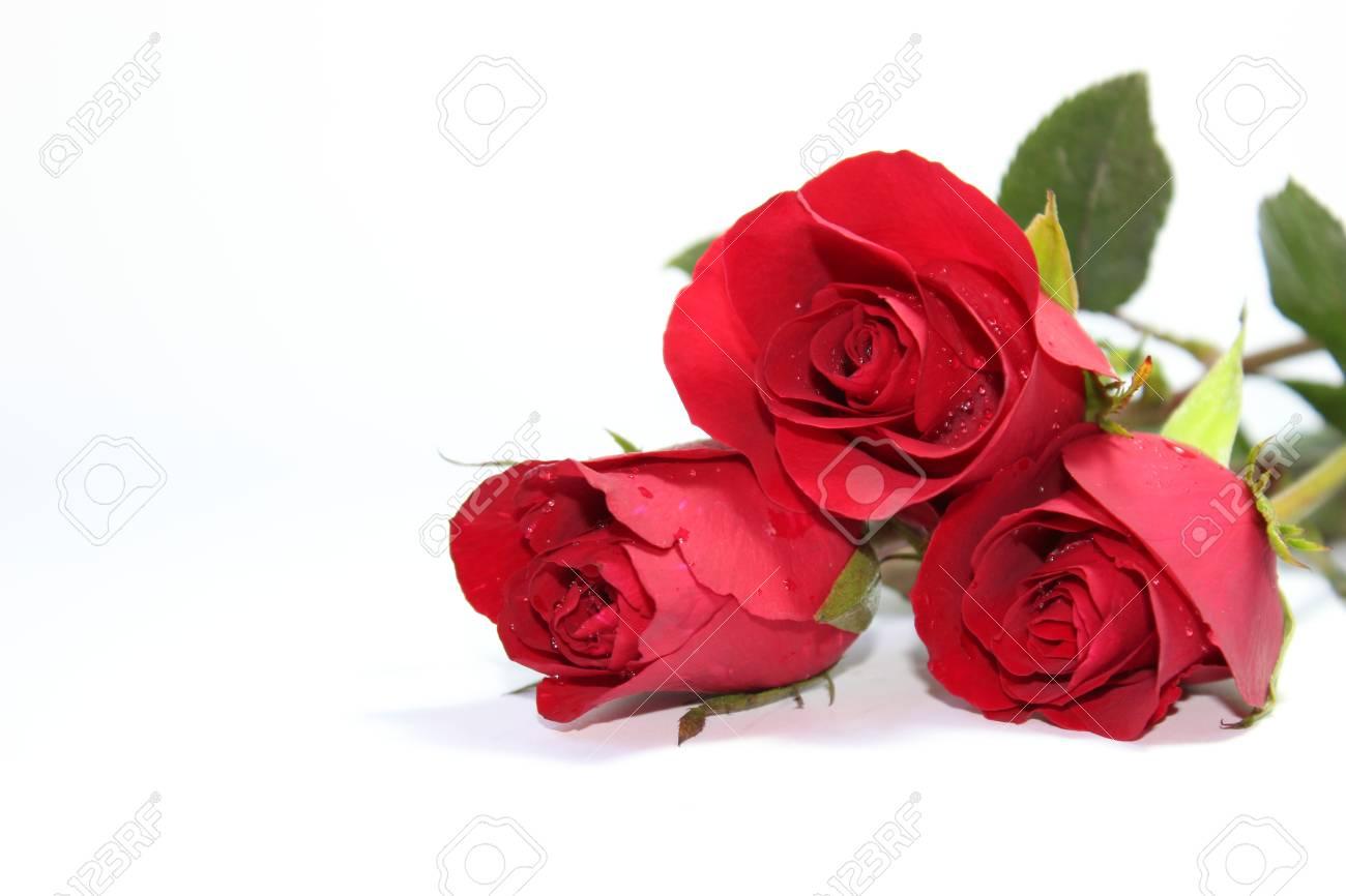 Rose rouge sur l'arrière-plan Banque d'images - 36614544