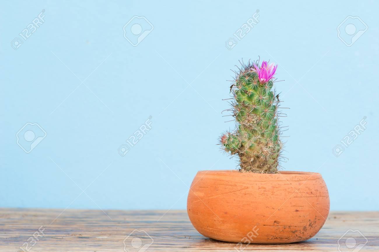 Cactus Avec Fleur Rose Dans Un Pot De Fleurs Sur La Table En Bois