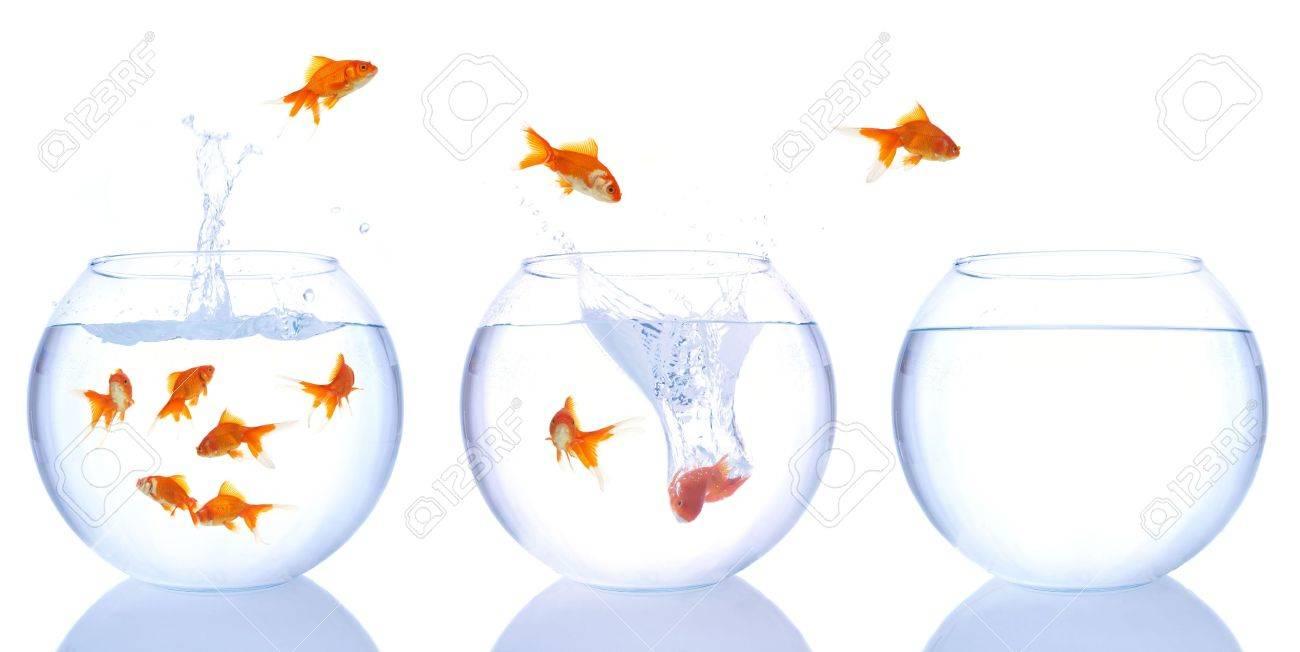 goldfishes Stock Photo - 898407