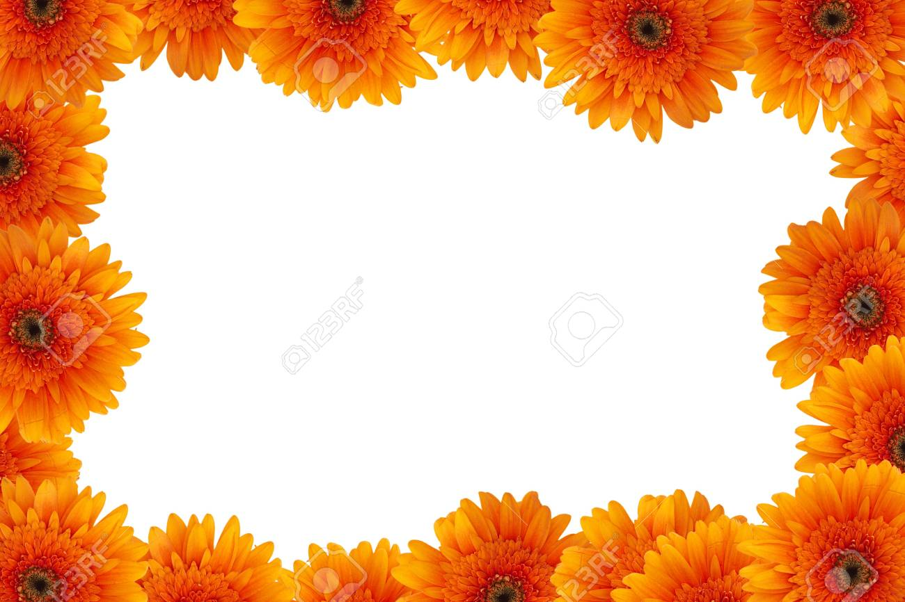 Frame With Orange Daisy Flowers Space For Messages Stock Photo