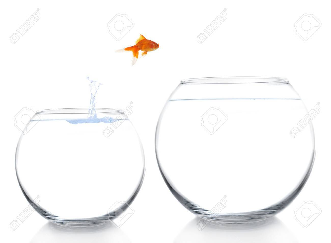 goldfish moving to a better and bigger house Stock Photo - 8650874