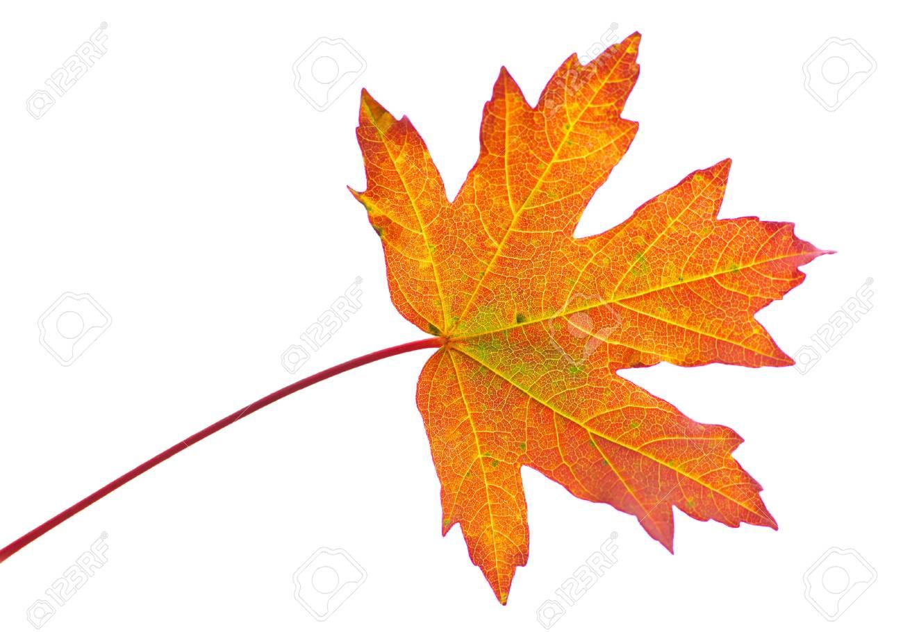 Blatter Herbst Laub Rot Gelb Saisonale Farbe Hintergrunde