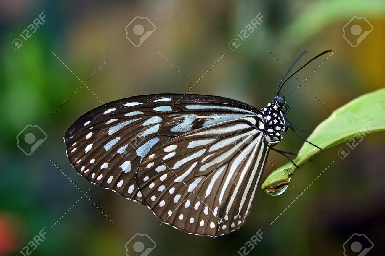 Butterfly close up Stock Photo - 538473