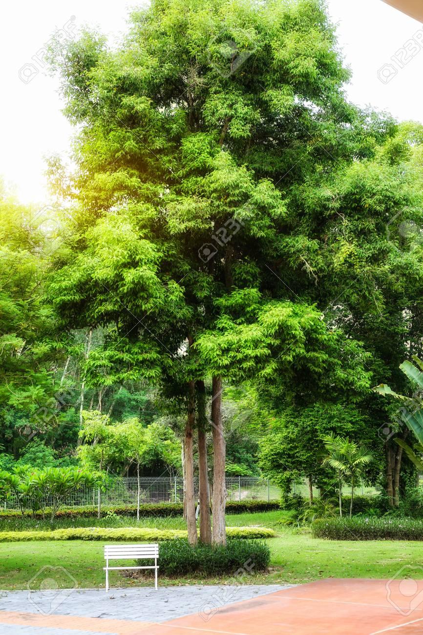 Weißer Stuhl Im Garten Für Entspannung Lizenzfreie Fotos Bilder Und