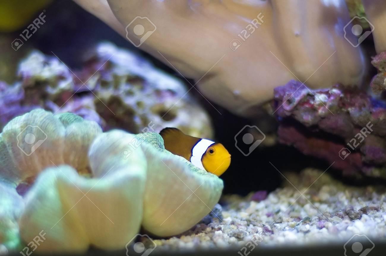tropic fish in the aquarium Stock Photo - 3841759