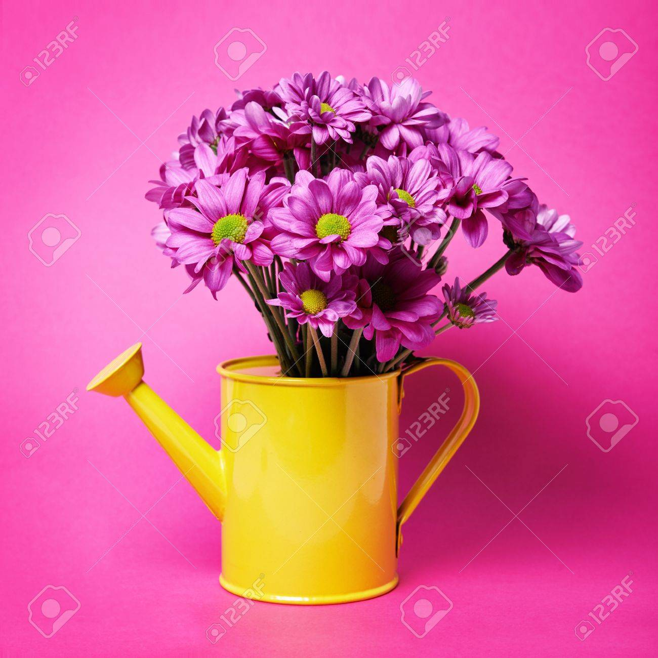 Bright Lilac Flowers In Yellow Can On Pink Background Stock Photo