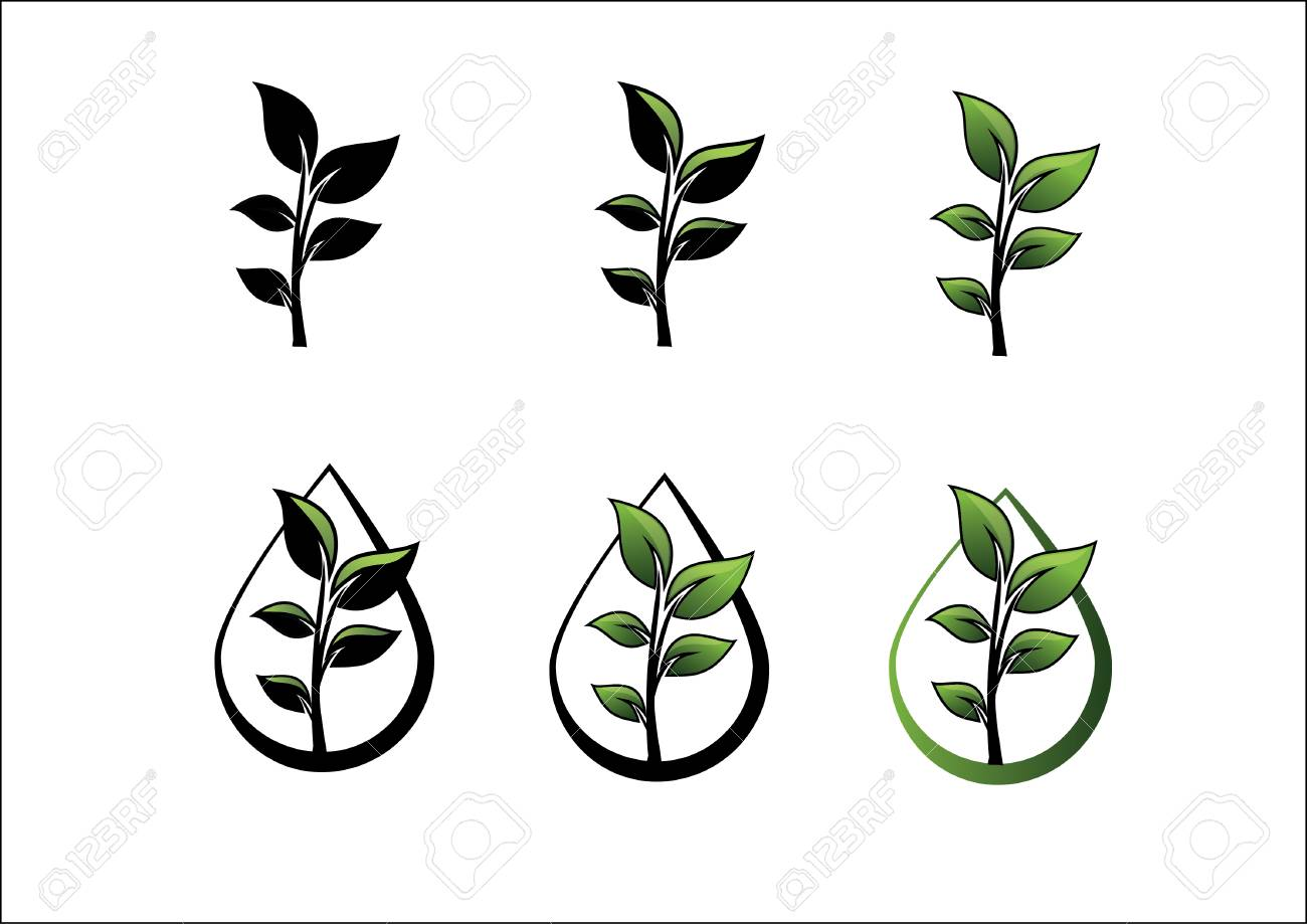 Plant And A Drop Of Water Royalty Free Cliparts Vectors And Stock