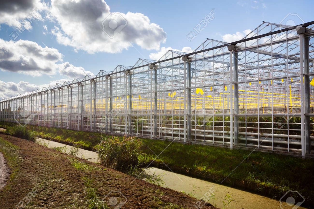Greenhouse exterior under a sky with nice clouds in Westland in the Netherlands - 155943365