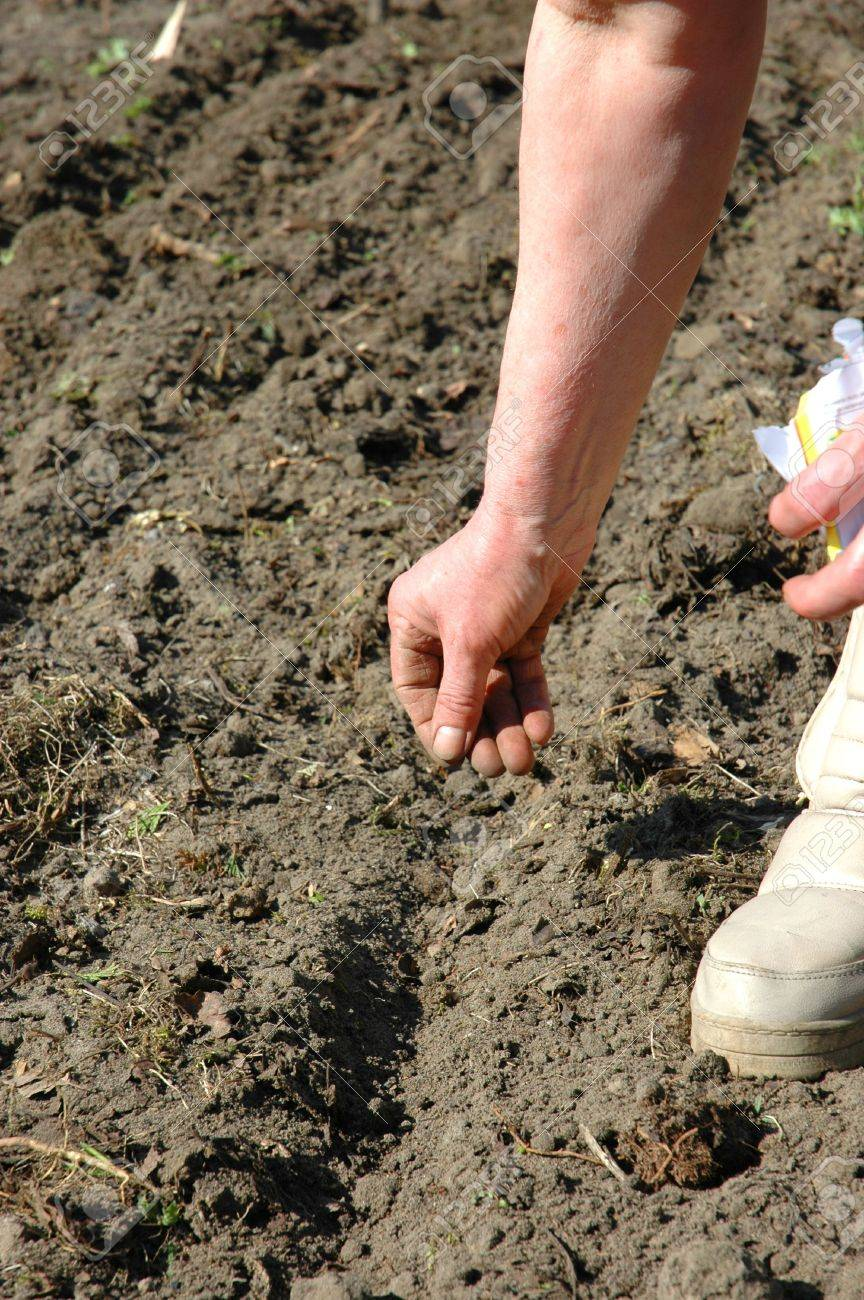 The farmer is sowing seeds to furrows Stock Photo - 7366585