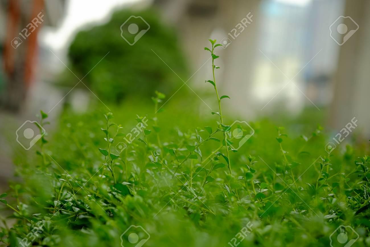 Dicke Grüne Gartenhecke Muster selektive Fokus Lizenzfreie Fotos