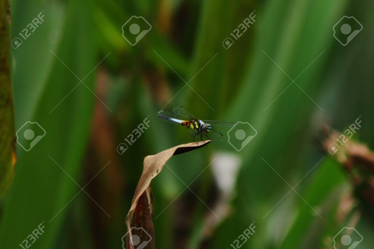 Dragonfly Stock Photo - 18165973