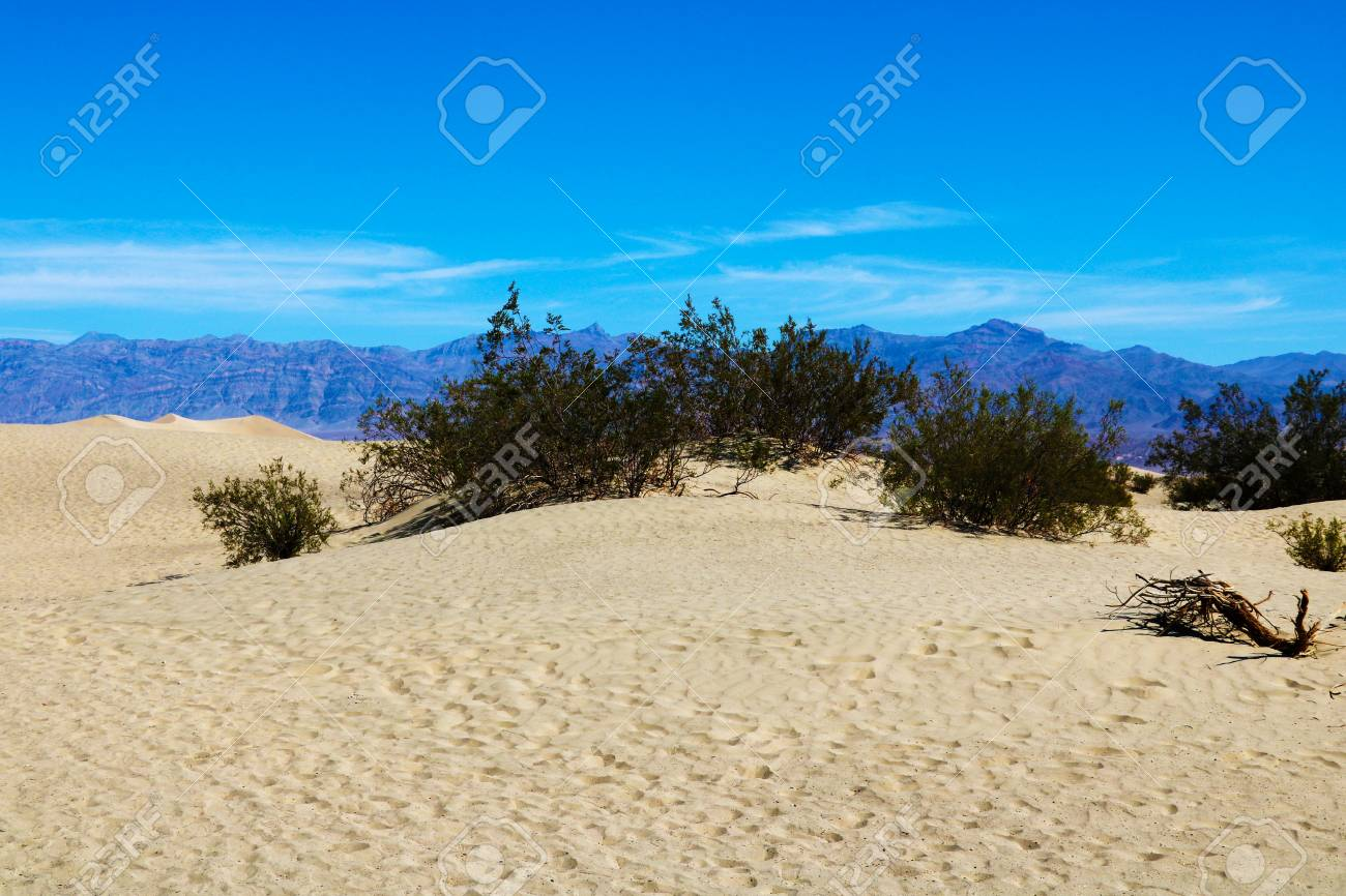 Camels Huge Dunes Of The Desert Fine Place For Photographers And Travelers Beautiful Structures Of 123rfcom Huge Dunes Of The Desert Fine Place For Photographers And Travelers