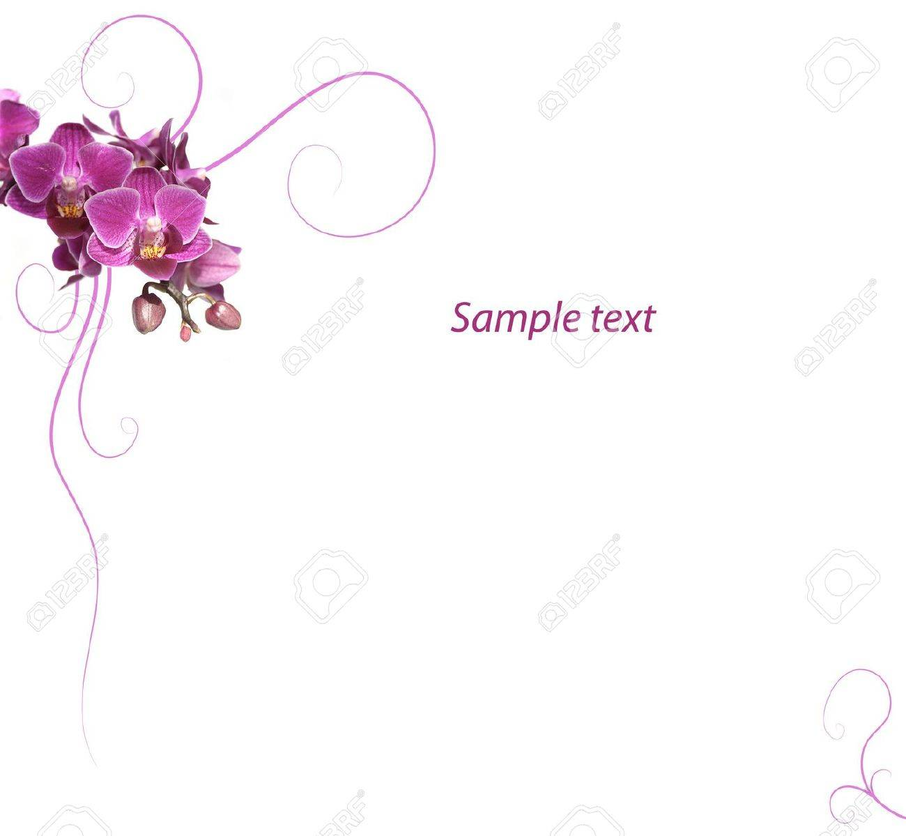 Purple orchid romantic background Stock Photo - 5257656