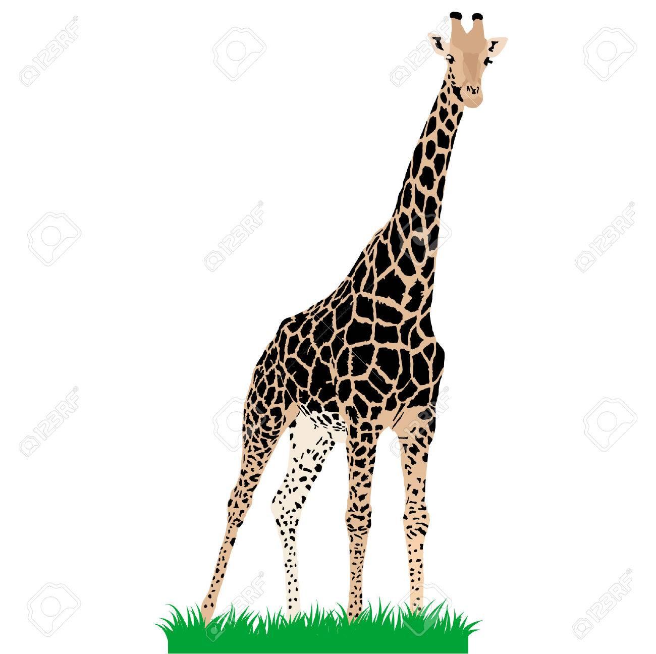 African animals 3 : Vector giraffe Stock Vector - 5441838