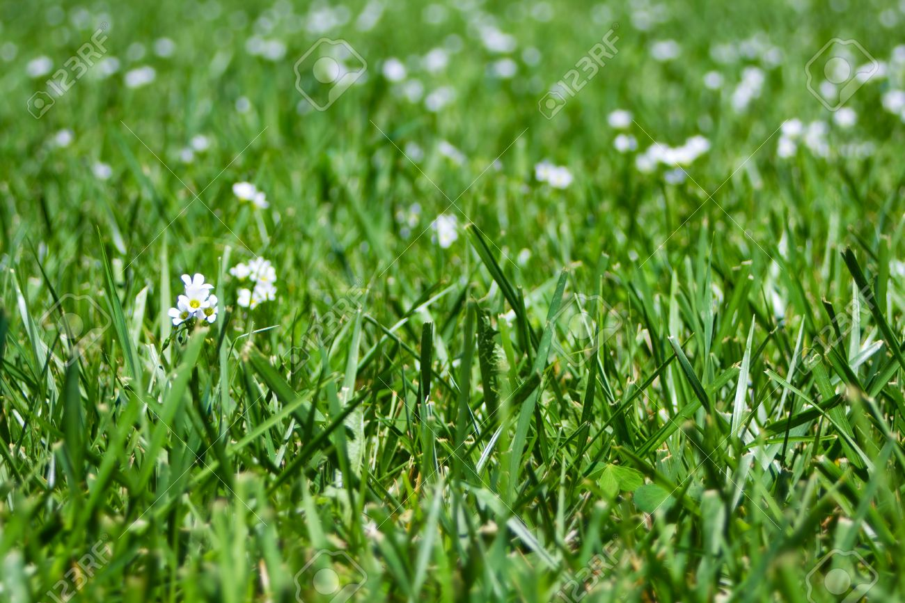 100 plant with small white flowers small white flowers of a plant with small white flowers dhlflorist Image collections