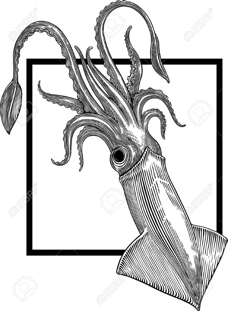 black and white illustration of squid on white background - 9527686