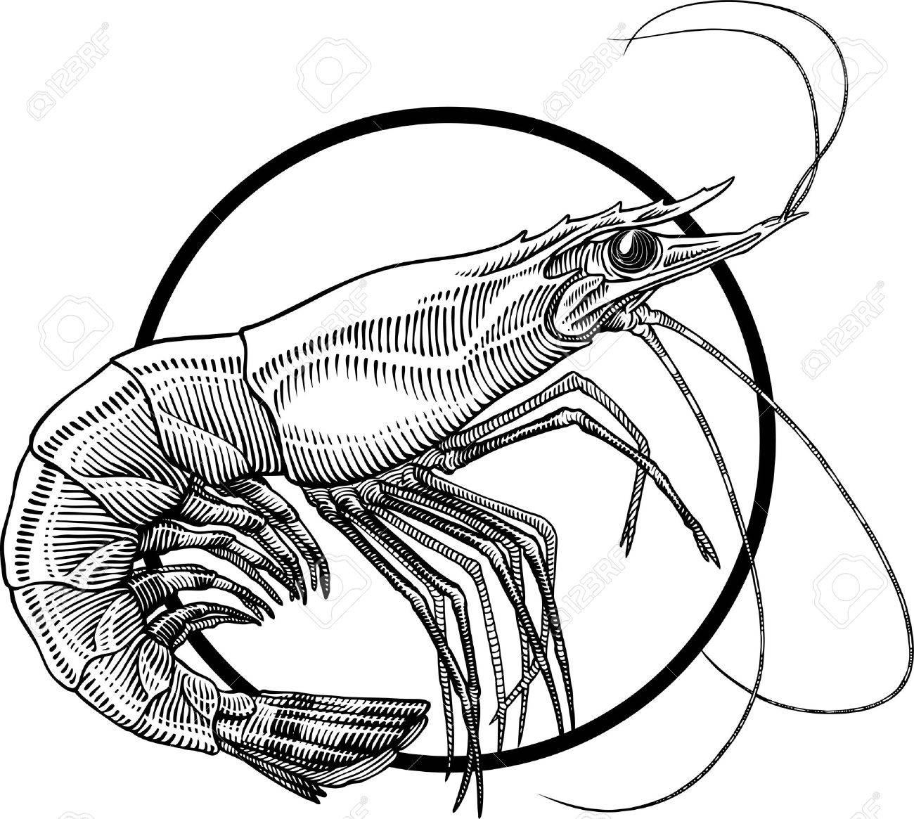 黒と白海老のイラストを彫刻します サークル フレームを簡単に削除できます のイラスト素材 ベクタ Image