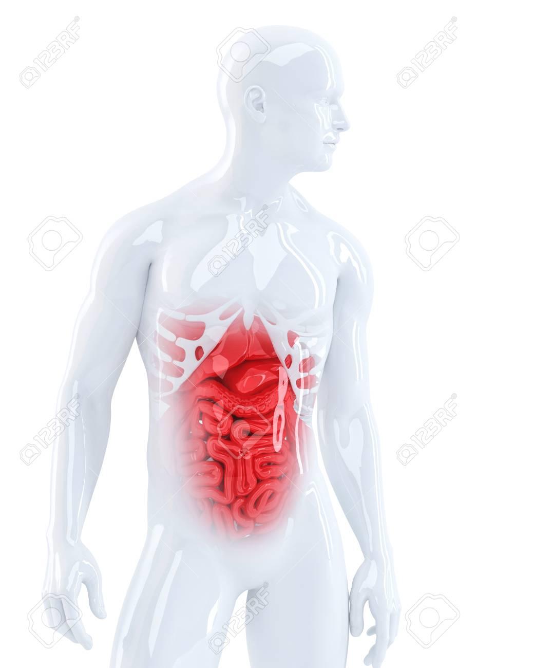 3d man displaying his internal organs medical illustration stock 3d man displaying his internal organs medical illustration isolated contains clipping path stock ccuart Images