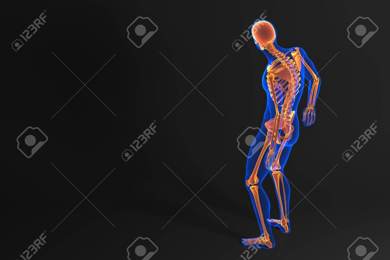 Großzügig Blank Menschliches Skelett Bilder - Menschliche Anatomie ...