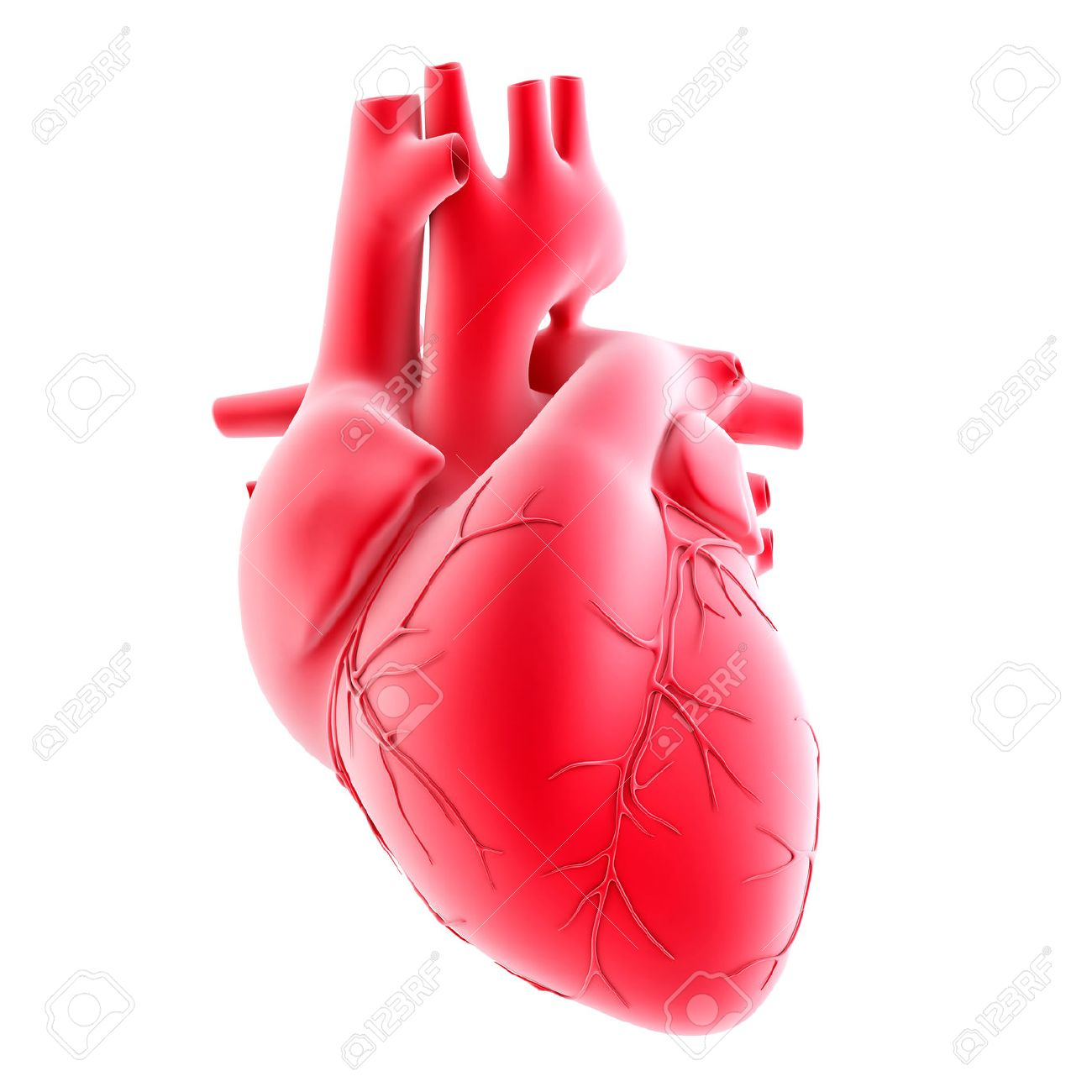 Human heart. 3d illustration. Isolated, contains clipping path Standard-Bild - 33234189