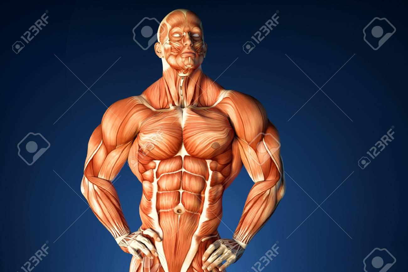Tolle Spröder Stern Anatomie Bilder - Menschliche Anatomie Bilder ...
