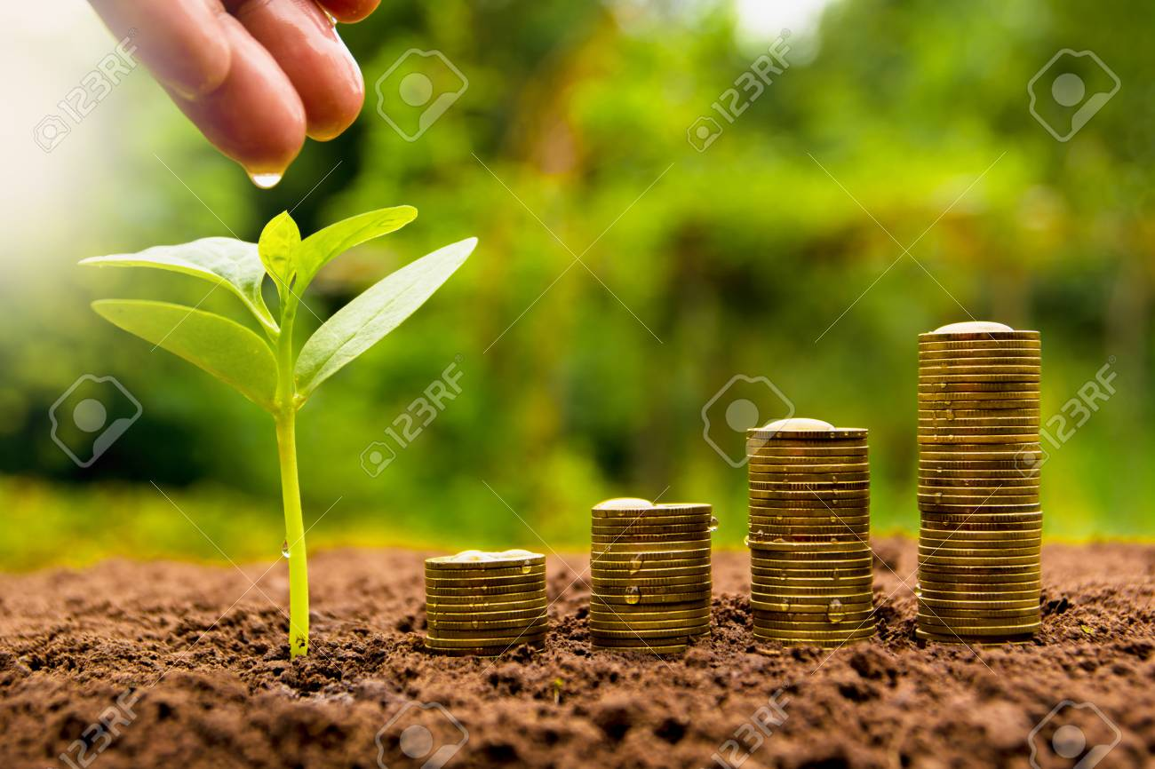 Female hand watering young plant with stack coin for growing business - 78058823