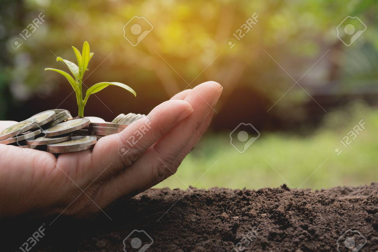 Hand holding money gold coins with plant in hand for financial and saving money concept. - 97373832