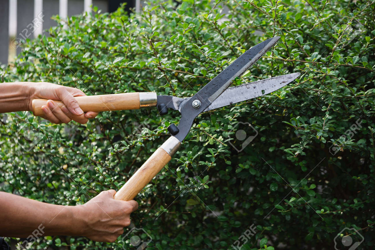 Gardener pruning trees with pruning shears on nature background. - 167184057
