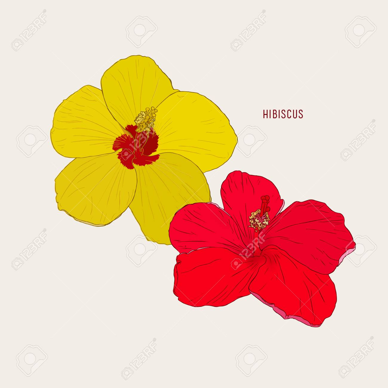 Hawaiian Hibiscus Flowers Yellow And Red Sketch Vector Royalty