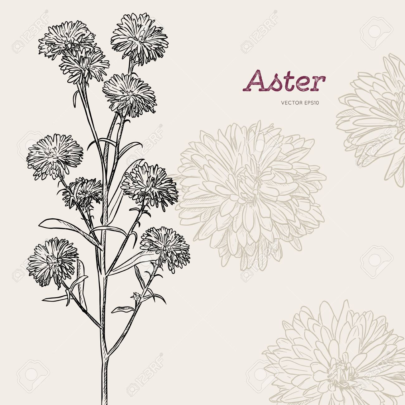 Aster Flower Small Purple Flower Hand Draw Sketch Vector Royalty