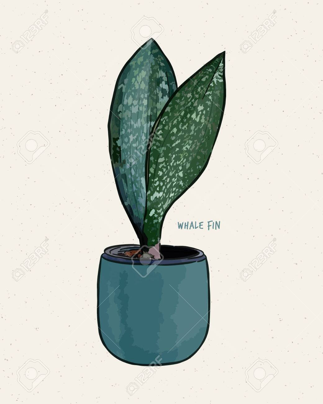 Sansevieria Masoniana Whale Fin Snake Plant Paddle Plant Hand Royalty Free Cliparts Vectors And Stock Illustration Image 148151297