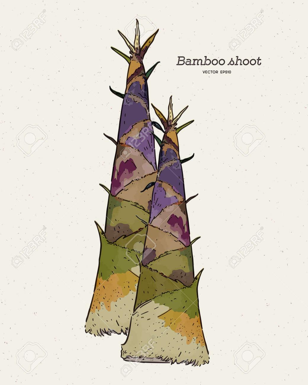bamboo shoot, hand draw sketch vector. - 165340404